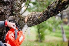 Mężczyzna tnący drzewa używać elektryczną piłę łańcuchową Obraz Stock