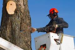 mężczyzna tnący drzewo Obrazy Royalty Free