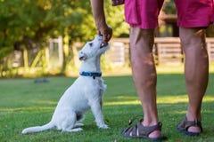 Mężczyzna trenuje z jego psem Zdjęcia Stock
