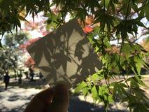 Mężczyzna trzyma kwadratowego pustego białego papier z pięknymi zielonymi liśćmi klonowymi Fotografia Royalty Free
