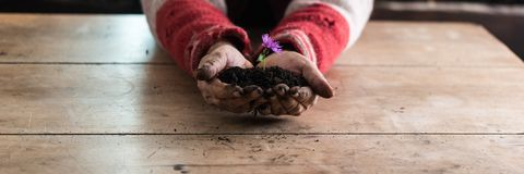 Mężczyzna trzyma purpurowego wiosna kwiatu w kopu żyzny zmrok w ten sposób Fotografia Stock
