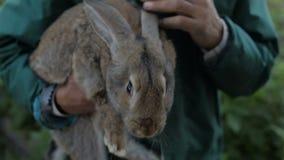 Mężczyzna trzyma szarego królika zbiory