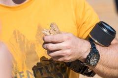Mężczyzna trzyma trzy Dostrzegającej Toadhead Agama jaszczurki Zdjęcia Royalty Free