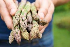 Mężczyzna Trzyma wiązkę Świeży asparagus Fotografia Stock