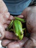 Mężczyzna Trzyma Złotego Bell żaby i zieleń zdjęcia stock
