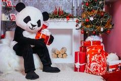 Mężczyzna ubierał jako panda trzyma Bożenarodzeniowego prezent fotografia royalty free