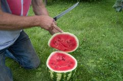 Mężczyzna w cajgach klęczy na trawie, cięcie z nożowym czerwonym dojrzałym arbuzem Zdjęcie Stock