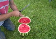 Mężczyzna w cajgach klęczy na trawie, cięcie z nożowym czerwonym dojrzałym arbuzem Zdjęcia Royalty Free