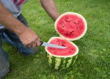 Mężczyzna w cajgach klęczy na trawie, cięcie z nożowym czerwonym dojrzałym arbuzem Obraz Stock