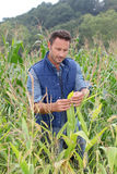 Mężczyzna w kukurydzanym polu Obrazy Royalty Free