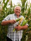 Mężczyzna w kukurydzanym polu Zdjęcie Royalty Free