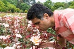 Mężczyzna w ogródzie różanym Fotografia Stock