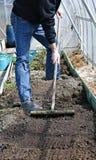 Mężczyzna w szklarni zrównywał ziemię z świntuchem na gardenbed Obrazy Stock