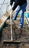 Mężczyzna w szklarni zrównywał ziemię z świntuchem na gardenbed Zdjęcie Royalty Free