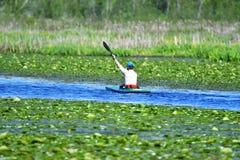 Mężczyzna wiosłuje wzdłuż jeziora na kajaku obraz royalty free