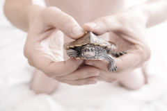 Mężczyzna wręcza mienie żółwia Selekcyjna ostrość Obraz Stock