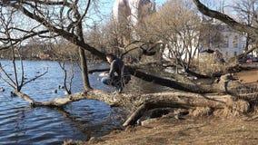Mężczyzna wspinał się drzewa, rzuca chlebowe kruszki w wodzie i karmi kaczek unosić się zbiory