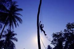 Mężczyzna wspina się kokosowych drzewa w ranku Zdjęcia Stock