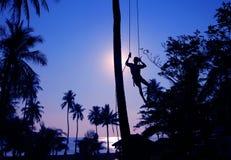 Mężczyzna wspina się kokosowych drzewa w ranku Fotografia Royalty Free