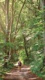 Mężczyzna wycieczkuje przez lasowej borowinowej drogi Przygoda, turystyka, las, wzgórza obraz royalty free