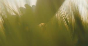 Mężczyzna Wzruszające uprawy 4K zdjęcie wideo