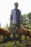 Mężczyzna Żywieniowe świnie W Sty zdjęcie royalty free