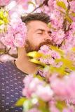 Mężczyzna z brodą i wąsy na spokojnych twarzy blisko menchiach kwitnie Jedność z natury pojęciem Brodaty mężczyzna z świeżym ostr zdjęcia stock
