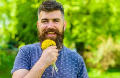 Mężczyzna z brodą i wąsy na szczęśliwej twarzy trzyma bukiet dandelions Brodaty mężczyzna trzyma żółtych dandelions romantyczny Zdjęcia Stock