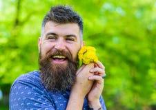 Mężczyzna z brodą i wąsy na szczęśliwej twarzy trzyma bukiet dandelions Romantyczny modniś robić bukiet, zielona natura Obraz Stock