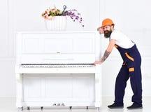 Mężczyzna z broda pracownikiem w hełmie i kombinezonach pcha, wysiłki ruszać się pianino, biały tło Ładowacz rusza się pianino Zdjęcia Royalty Free