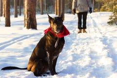 Mężczyzna z psem Zdjęcie Royalty Free