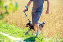 Mężczyzna z psem biega przez owsa pola fotografia stock