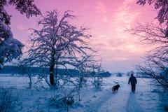 Mężczyzna z psim odprowadzeniem na śniegu zakrywał drogę zdjęcie stock