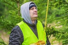 Mężczyzna z taśmy miarą blisko świerczyny w lesie zdjęcie stock