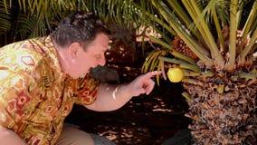 Mężczyzna znajdował żółtego jabłczanego obwieszenie na drzewku palmowym zbiory wideo
