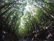 Mężczyzna zrobił lasowi Zdjęcia Stock