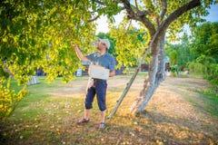 Mężczyzna zrywania jabłka Zdjęcia Royalty Free