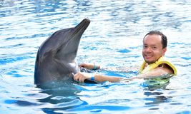 Mężczyzny mienia delfin w basenie fotografia royalty free