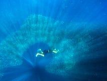 Mężczyzny nur sardynki ryby szkoła Ogromna kolonia pelagic ryba w otwartej wodzie tropikalny morze Freediver podwodny zdjęcie royalty free