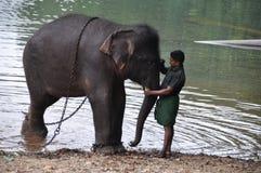 Mężczyzny obrazu znak na czole elefant zdjęcia royalty free