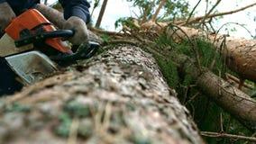 Mężczyzny piłowania drewno piłą łańcuchową Fachowego lumberjack tnący drzewo piłą łańcuchową zbiory