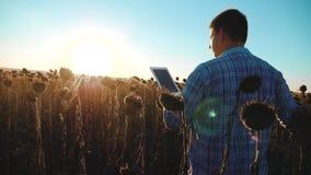 Mężczyzny rolnik z pastylką w słonecznikowym pracy polu iść glebowi spacery mlejący Steadicam zwolnionego tempa wideo agronom zdjęcie wideo