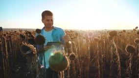Mężczyzny rolnik z pastylką w słonecznikowym pracy polu iść glebowi spacery mlejący Steadicam zwolnionego tempa wideo agronom zbiory wideo