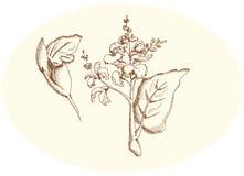 Mędrzec i mądry kwiat Zdjęcie Stock