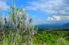 Mędrzec muśnięcie z dolinnym widokiem Fotografia Stock