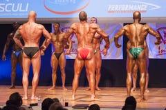 Męscy bodybuilders napinają ich mięśnie i pokazują ich budowę ciała Fotografia Royalty Free