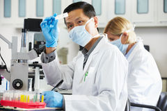 Męscy I Żeńscy naukowowie Używa mikroskopy W laboratorium Zdjęcia Royalty Free