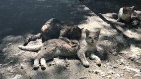 Męska kot czułość dla żeńskiego kota zbiory