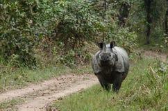 Męska nosorożec żywa w chitwan nationnal parku, Nepal zdjęcia royalty free