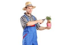 Męska ogrodniczka żyłuje rośliny Fotografia Royalty Free